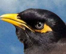 Famous Bird Poems